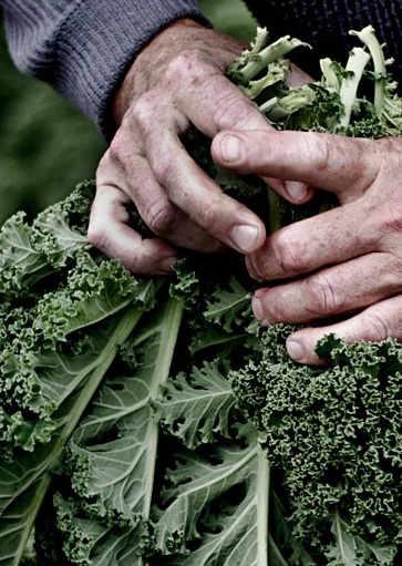 Food and Wine Culture 3 nachhaltige Zucht und Viehhaltung